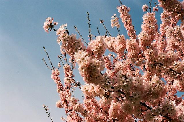 springlonging