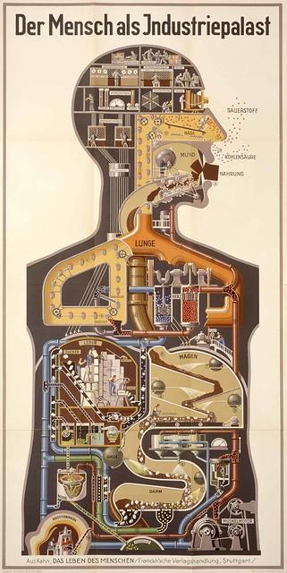 el cuerpo humano como planta industrial, 1926