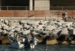 dozens of sea gulls on his boat