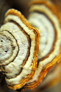 Georgia Fungi on Decaying Log