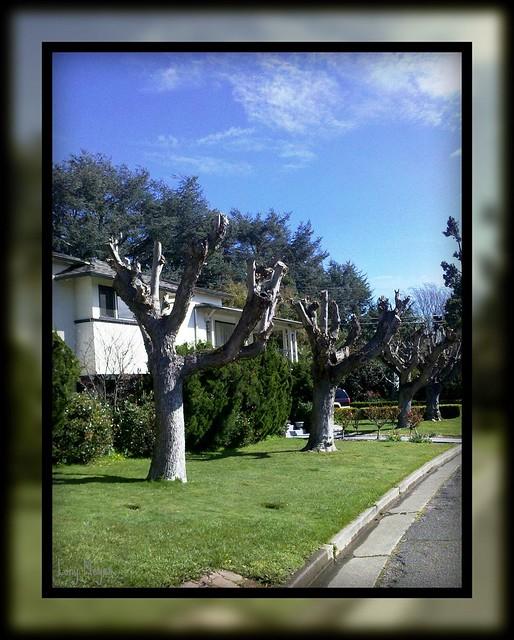 Vista Neighborhood