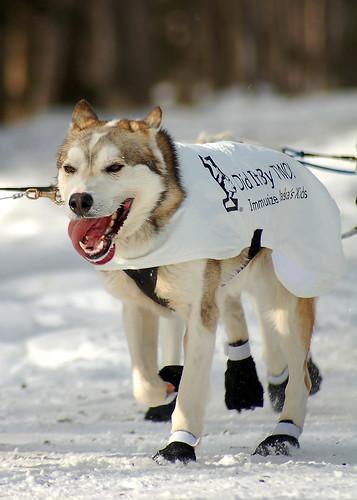 Peter Kaiser Dog