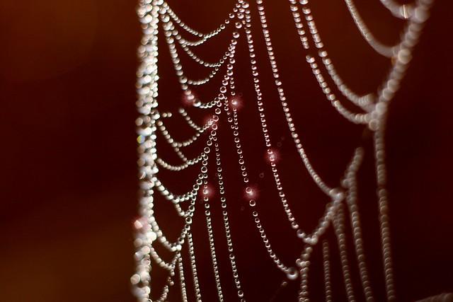 Pearls  [ Canon 1000D XS REBEL] [ Canon 70 200 F4 L] [Kenko Extension tube]