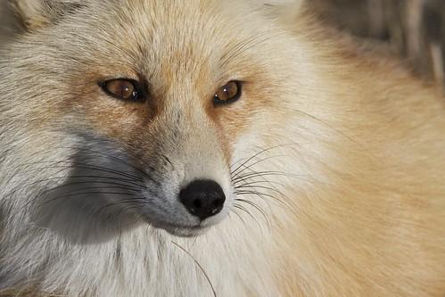 Fox Hwy 22