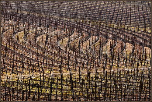 Geometrie in vigna - Geometries in the vineyard