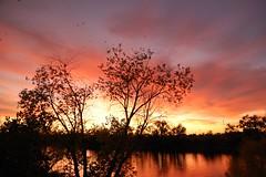 20091029 Silhouettes on the Sacramento River