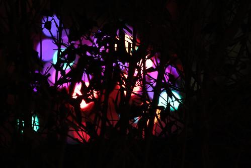 Christmas Lights  by Sam Blayney
