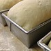 Loaf Pans of Farmhouse White Sandwich Bread ready for the oven