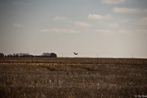 usa flying hawk farm flight kansas southwestern tice
