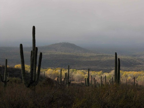 arizona usa cacti landscapes flickr desert unitedstatesofamerica gps 2010 panoramio saguarocactuscarnegieagigantea