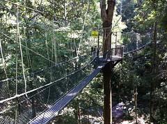 outdoor structure(0.0), suspension bridge(0.0), rolling stock(0.0), park(0.0), trail(1.0), canopy walkway(1.0), rope bridge(1.0), bridge(1.0),