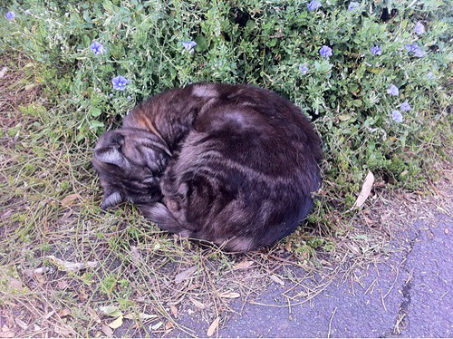 Dennis Station cat is curled up on the platform, sleeping - was not at all interested in scratches.