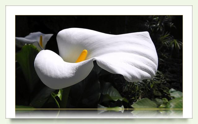 Teneriffa - visit in the Botanical garden