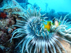 tropics(0.0), coral(0.0), fish(0.0), stony coral(0.0), lionfish(0.0), coral reef(1.0), organism(1.0), marine biology(1.0), invertebrate(1.0), marine invertebrates(1.0), underwater(1.0), reef(1.0), pomacanthidae(1.0), sea anemone(1.0),