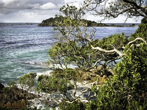 Moturiki Island.