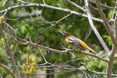 20110500 - May Birds