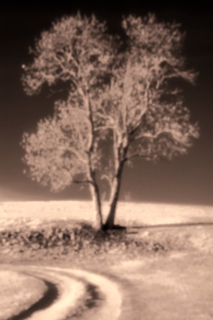 Pinhole Infrared with Skink Pinhole Pancake for Nikon