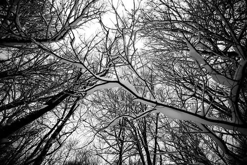 trees winter bw snow tree cool backyard outdoor uncool cool2 cool5 cool3 cool6 cool4 explored cool7 uncool2 uncool3 uncool4 uncool5 iceboxcool