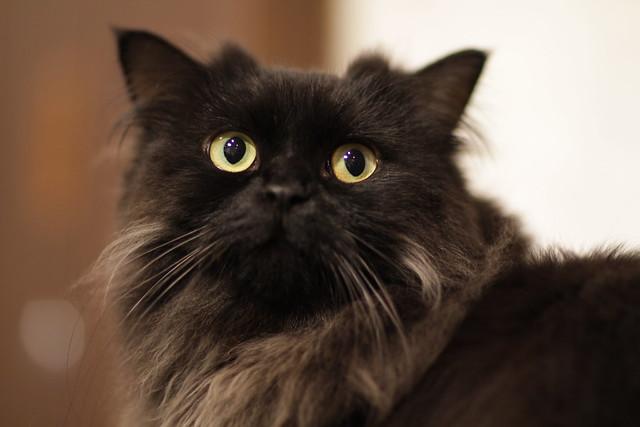 Black Cat Cafe Mangago