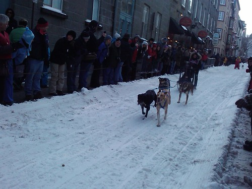 5408120009 c044c81d36 Sled dog