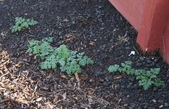 flower(0.0), produce(0.0), leaf(1.0), soil(1.0), plant(1.0), herb(1.0), mulch(1.0),
