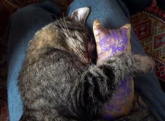 minouette-pillow