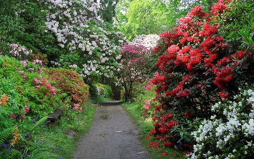Leonardslee Gardens, West Sussex, England | Tranquil walks through woodland paths lined with flowering azaleas and rhododendrons in May (2 of 23)