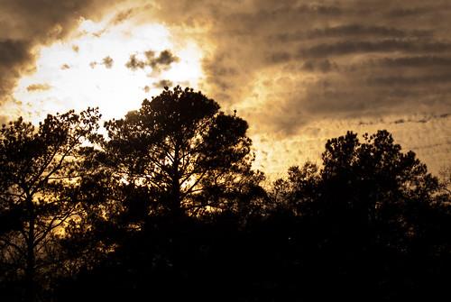 trees sunset sun nature silhouette clouds georgia albany doughertycounty thesussman sonyalphadslra200 project36612011