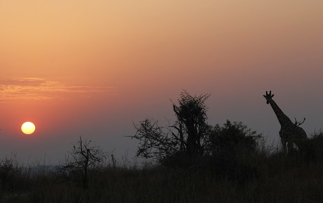 Uganda, sunrise at Murchison Fall National Park