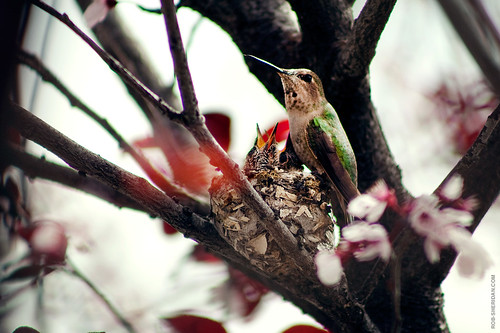 Hummingbird nest. 2/19/11.