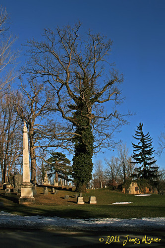 Forest Lawn Cemetery Buffalo NY Trees