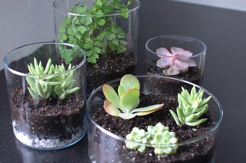 home plant фото