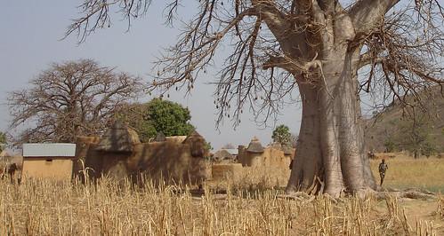 Tatasomba dwarfed by the baobab
