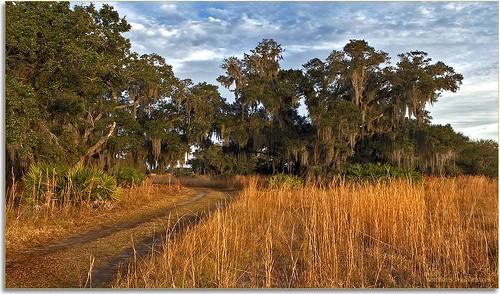 landscapes parks professionalphotographer stateparks 2470mm oldflorida floridaimages detailstudies lakekissimmee floridastateparks photoworkshops phototourguide