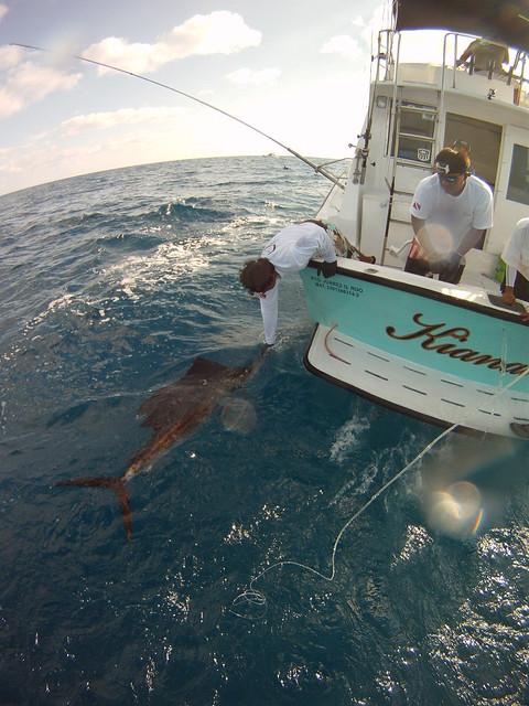 Isla mujeres cancun sportfishing flickr photo sharing for Isla mujeres fishing