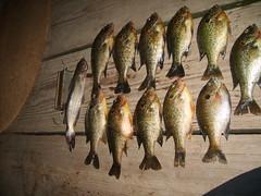 Fishing trip (2)