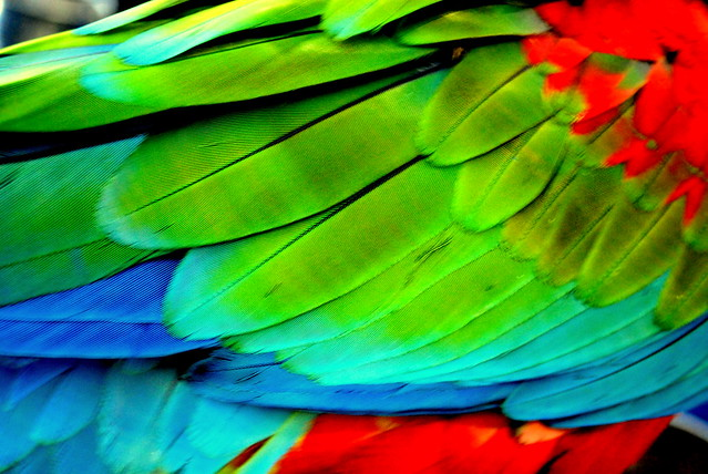Parrot feathers - photo#6
