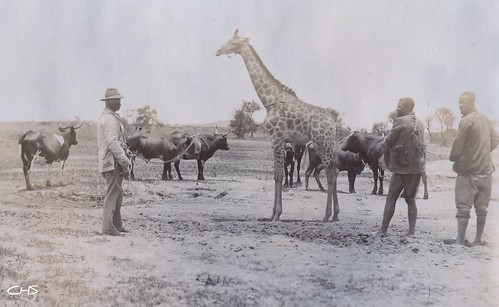 Rhodesia 1905 On a hunt by Claire Stocker (Stocker Images)