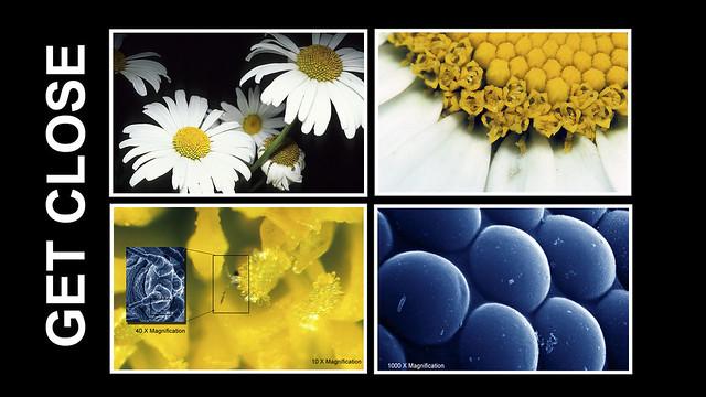 GET CLOSE - macrophotographs of Flower