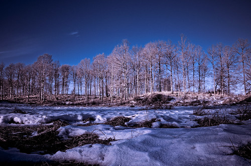 trees winter light snow cold color night forest photoshop nikon warm naturallight lightroom 18mm 18105 d7000