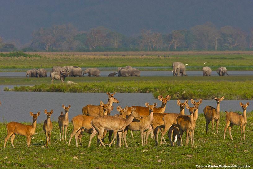 Deer and elephants