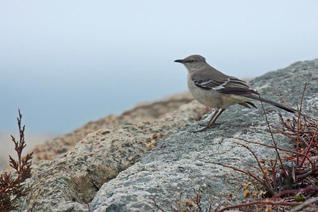 20110218_134430_birds