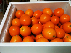 plant(0.0), clementine(1.0), orange(1.0), citrus(1.0), orange(1.0), valencia orange(1.0), kumquat(1.0), produce(1.0), fruit(1.0), food(1.0), tangelo(1.0), bitter orange(1.0), tangerine(1.0), mandarin orange(1.0),
