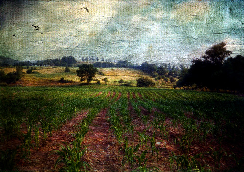 field childhood corn farm memories rows wistful distressedjewell