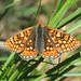 Marsh Fritillary (Andy McGeeney)