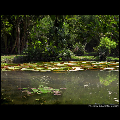 garden zen lake victoriareggia nymphae nature friendship relax jardimbotanico riodejaneiro brazil solidariety musictomyeyes heartsawards flickrshearts peaceawards karmagroup speakinglove mywinners citrusaward goldstar1 brillianteyesjewels soulscapes richardsgroup magicunicornverybest thirdlife thegoldengallery asquarearists richardssilvergroup nightandmorningonflickr visionqualitygroup rulaexcelentce favetop5599 ablackrose imagesforthelittleprince richardsfloraefauna moulinrouge cherryontop sailthesevenseas focusonbeauty perceptiongroup thecubeexcellencygallery highenergyplaces thegoldenpowerclub thefriendsofelbrujo splendid gatetoparadise vernissage overtheexcellence zenenlightementgroup lizaenchantingphotogarden themasterslightpainters50 thegardenofzen imagepoetry landscapedreams exhibitionoftalent theseaoftravelsoffantasies davincimemories favouriteofmyfavourites myfave galerieomega artnetcontemporyartists davincitouch bellissima yrpreferredpicture aestheticallyperfect richards50gold amazingloveit wordsbestdazzingshots empyrianflora artfortheart anythingessentialisinvisibletotheeye joebtesgroup winnerofthebestonflickr saariysqualitypictures