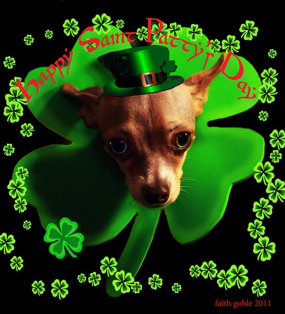 Happy Saint Paddy's Day from Flickr via Wylio