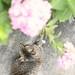 hydrangea & my cat