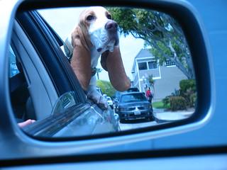 Balboa Dog