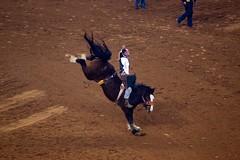 bull(0.0), matador(0.0), bullfighting(0.0), animal sports(1.0), rodeo(1.0), cattle-like mammal(1.0), jumping(1.0), equestrian sport(1.0), tradition(1.0), sports(1.0),